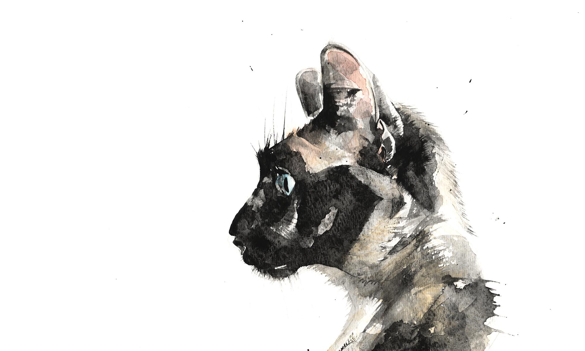 Cat Graff